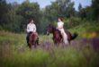 Где в Харькове покататься на лошадях