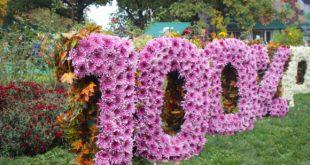 Бал хризантем в Фельдман Экопарк откроется 6 октября