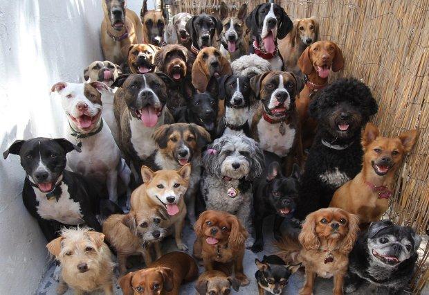 У Харкові жінка тримає в квартирі двадцять собак