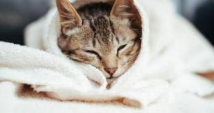 Приют для животных просит у харьковчан теплые вещи