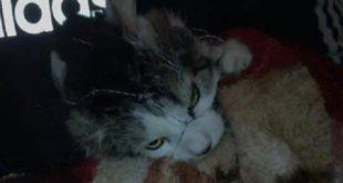В Харькове дважды спасли кота, просидевшего три дня на дереве