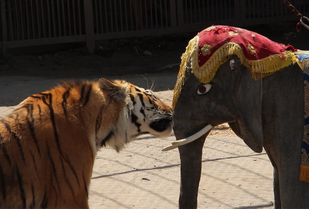 Необычному жителю Харькова подарили слона