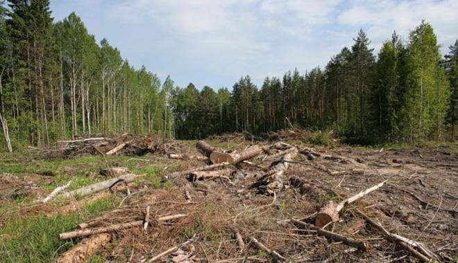 После приезда Зеленского на Харьковщине не зафиксировали новые незаконные вырубки леса