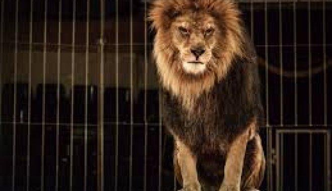 Активисты призывают харьковчан поддержать петицию о запрете цирков с животными