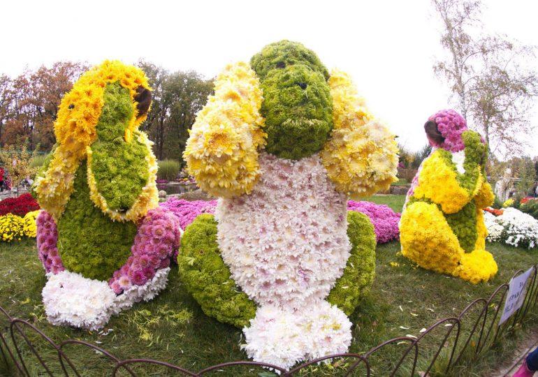В этом году на Бале хризантем в Фельдман Экопарке покажут 45 тысяч цветов