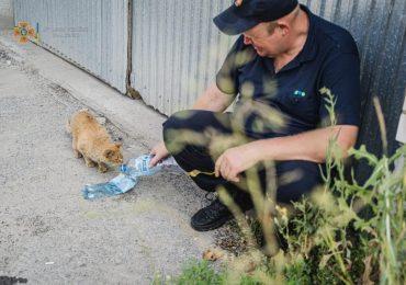 Рятувальник з Києва напоїв кота після пожежі та розчулив мережу (фото)