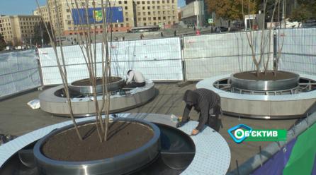 На площади Свободы появятся клумбы с деревьями
