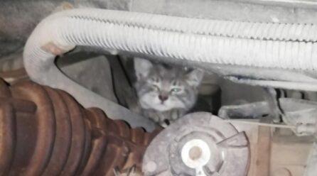 В Харькове спасли котенка, который залез под капот авто