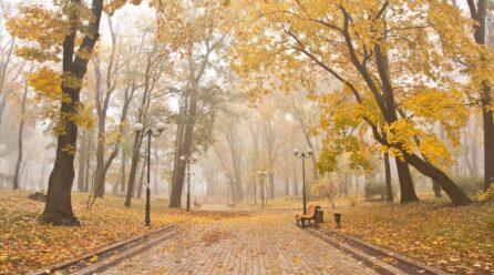 Топ-5 парків Києва, в яких варто погуляти восени